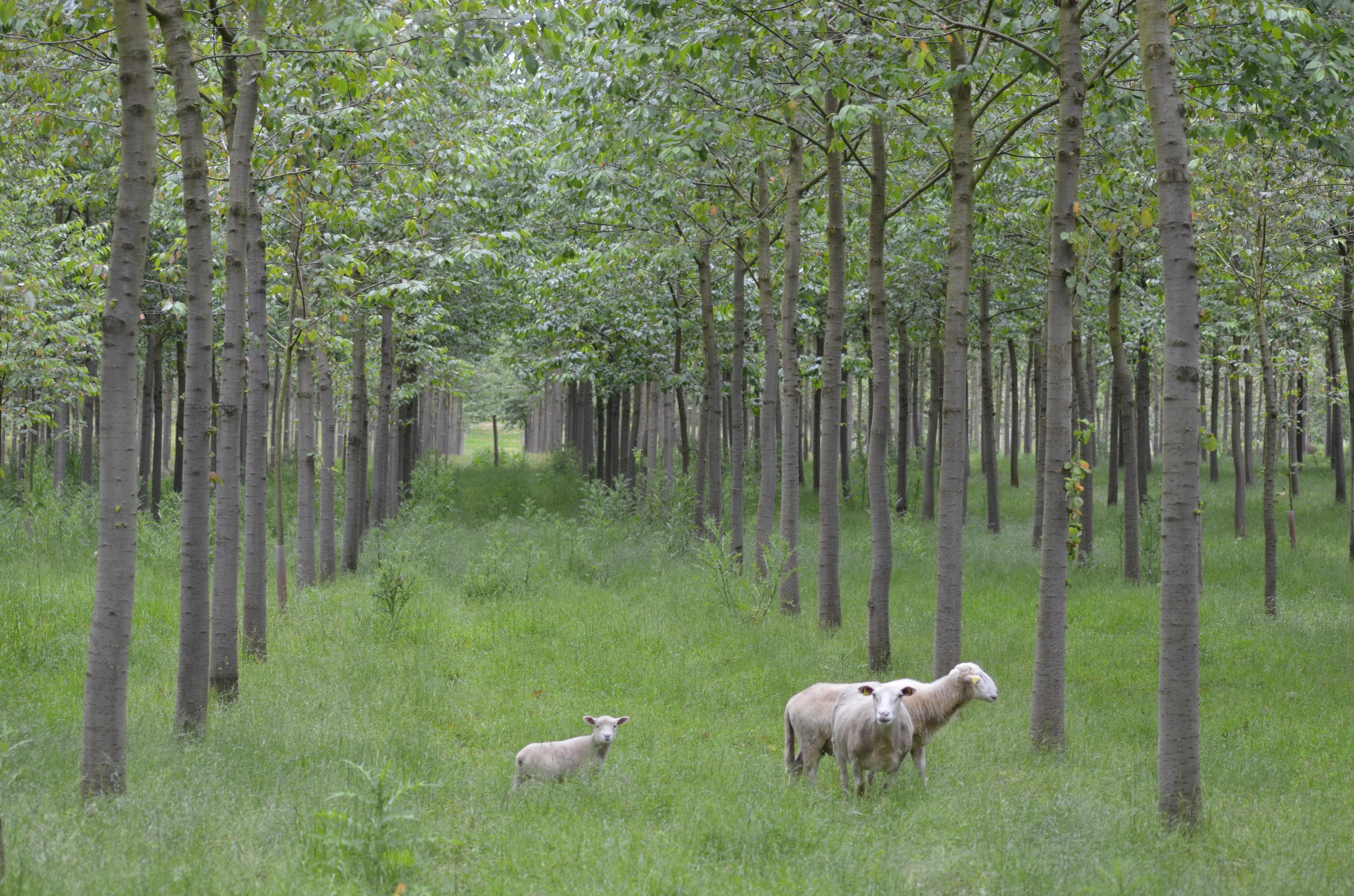 plantaciones de madera sostenible