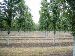 plantaciones sostenibles