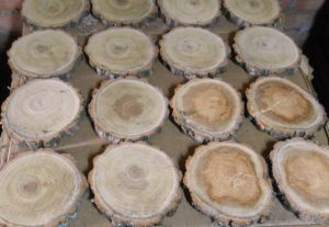 rodajas de madera de nogal