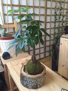 decorar plantas con rodajas de madera