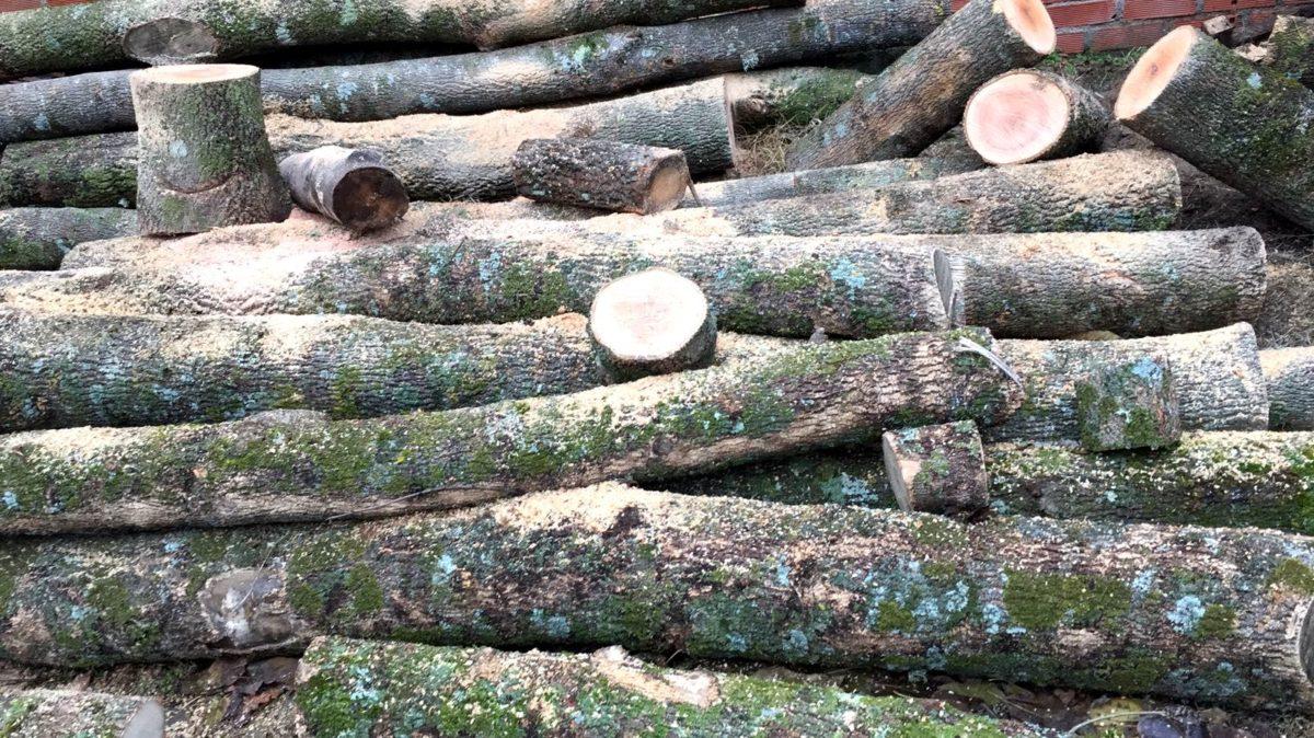 Troncos frescos de madera Woodna: Maderas Naturales