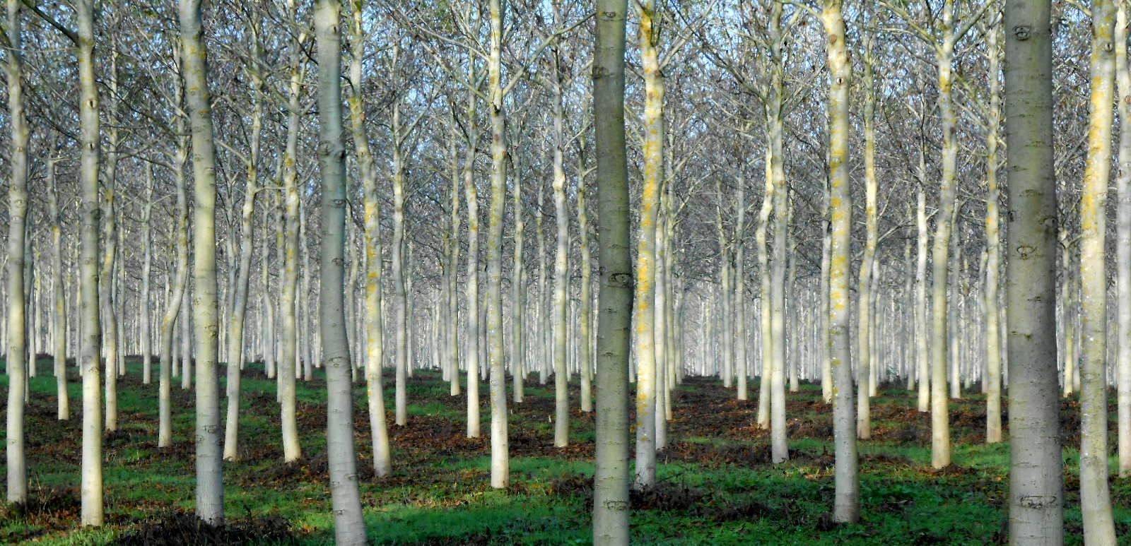 SHINRIN-YOKU: SUMÉRGETE ENTRE NOGALES - Woodna: Maderas Naturales