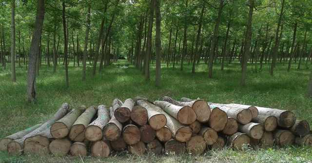 Nosotros - Woodna: Maderas Naturales