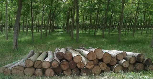 Por qué los bosques no son el pulmón verde del planeta - Woodna: Maderas Naturales