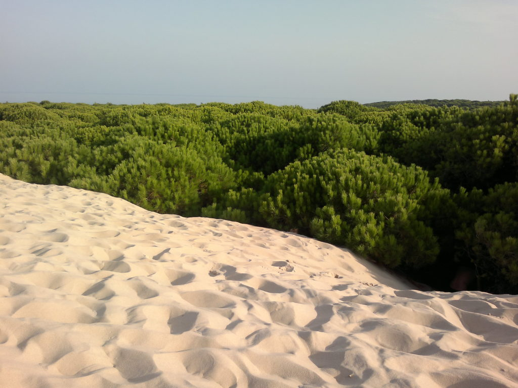 La Gran Muralla Verde (restauración forestal) - Woodna: Maderas Naturales