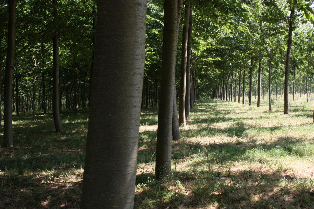 Una ardilla recorre España - Woodna: Maderas Naturales