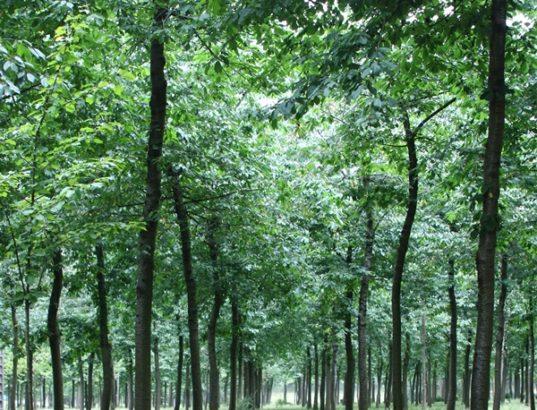 woodna maderas naturales
